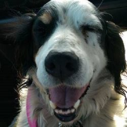 BEA-Adoption pending to foster Denise C.