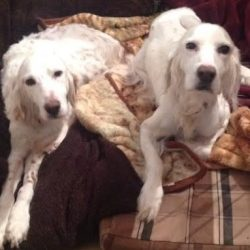 MAISEY & MAX-11 years
