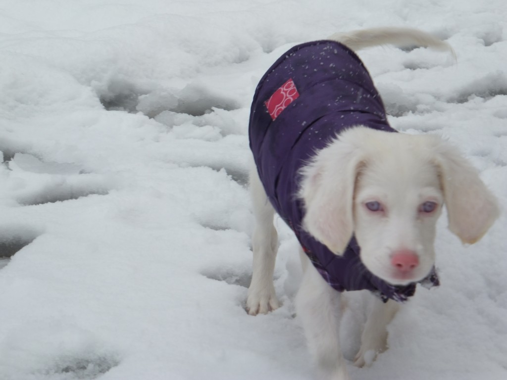 Angel's first snow 024
