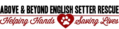 Above and Beyond English Setter Rescue Logo