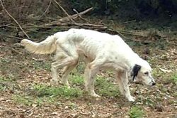 These Dogs Need Your Help - Read Their Stories