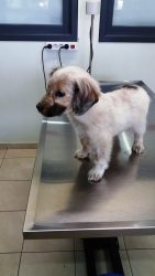 Baby Puppy3