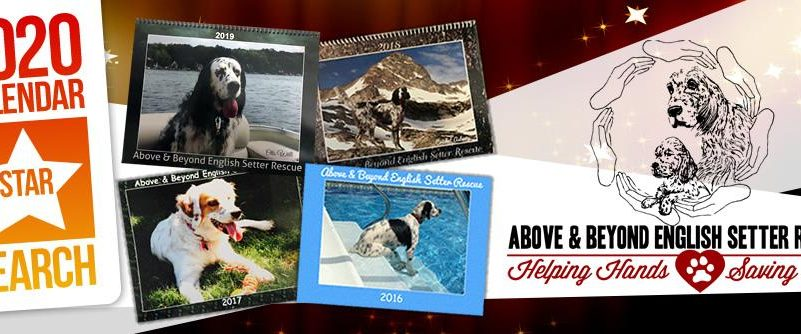 Home - Above and Beyond English Setter Rescue